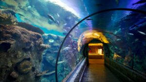 Shark Reef Aquarium Vegas 1